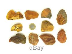 10 Stück (15-20g) Echter Roh Bernstein Rar Amber Stones Natural Baltic 164 Gramm