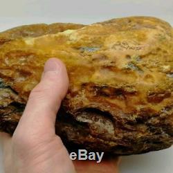 Amber Baltic Royal 1175 Gram Natural Stone Magnificent