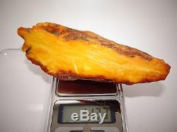 Antique Natural Baltic Egg Yolk Butterscotch Amber 113.3 Grams
