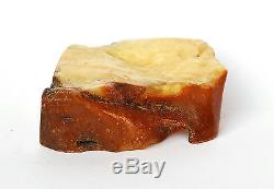 Baltic Amber 117,7 grams Natural Butterscotch raw rough stone