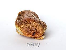 Baltic Amber 81 grams Natural White raw rough stone