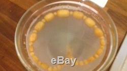 Butterscotch Bernstein Kette Baltic Amber 38 gr 100% Natur