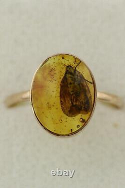 Genuine BALTIC AMBER 14K GOLD Large Fossil PLANTHOPPER 7.75 Ring 1.6g 191128-6