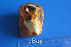 Genuine Natural Baltic Amber Stone 54.9 gr