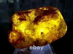Genuine Quality Large Baltic Amber Stone Transparent Cognac with Inclusions