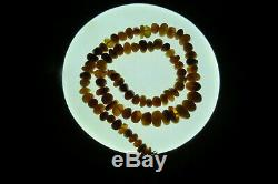 NATURAL OLD ANTIQUE BUTTERSCOTCH WHITE BALTIC AMBER 72.50 gr STONE