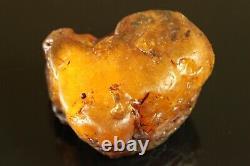 Natural BIG 119.3 gr. Butterscotch Egg Yolk Baltic SEA Amber Stone C729