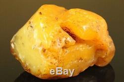 Natural BIG Antique 340 gr. Butterscotch Egg Yolk Baltic Amber Raw Stone C177
