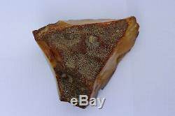 Natural Baltic amber stone w 316.7 grams