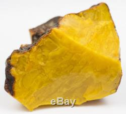 Old Huge (396g) Stone Egg Yolk Butterscotch Color Baltic amber