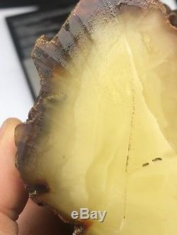 Raw amber stone rock 360 gr bernstein natural Baltic